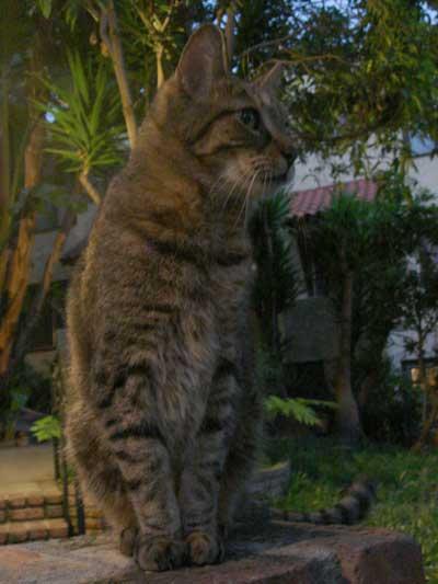 Toby2